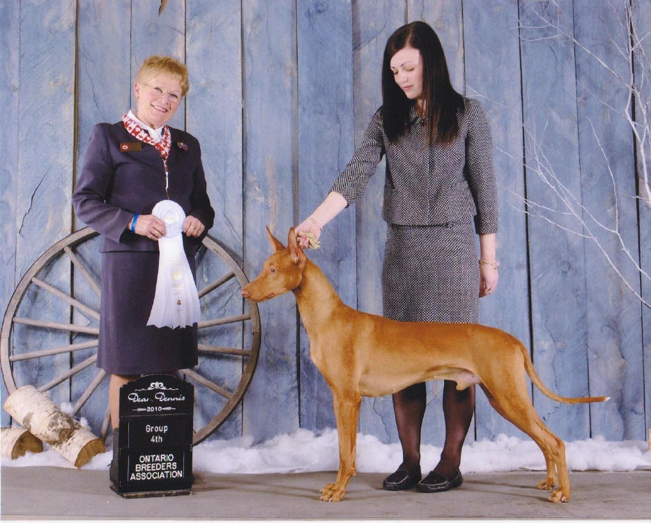 Moncton Kennel Club Dog Show